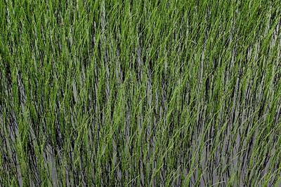 Grass in Sussex