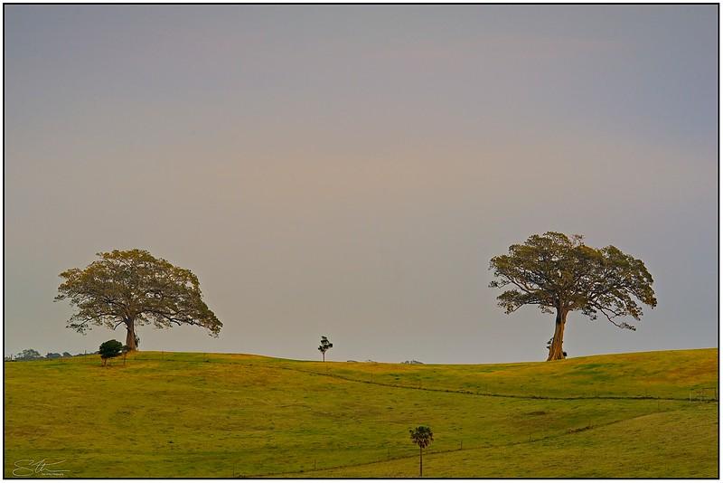 Natures Sym-e-tree...