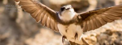 sparrow-5098-2