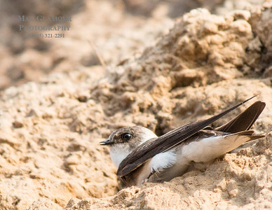 sparrow-5099
