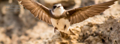 sparrow-5098
