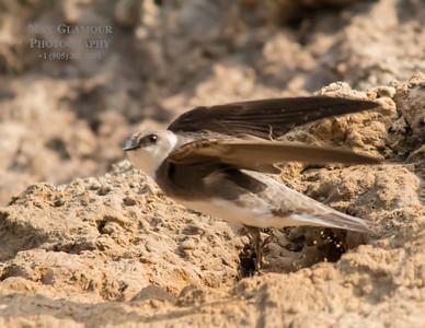 sparrow-5118