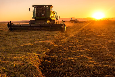 DSC_4356  Demmer Farms max size 30x45