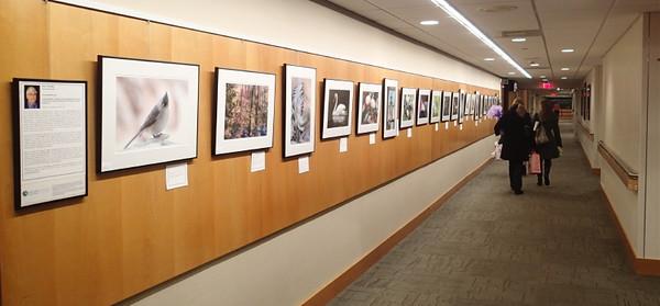 Main Street Gallery, Emerson Hospital, Concord  (Nov 2015)