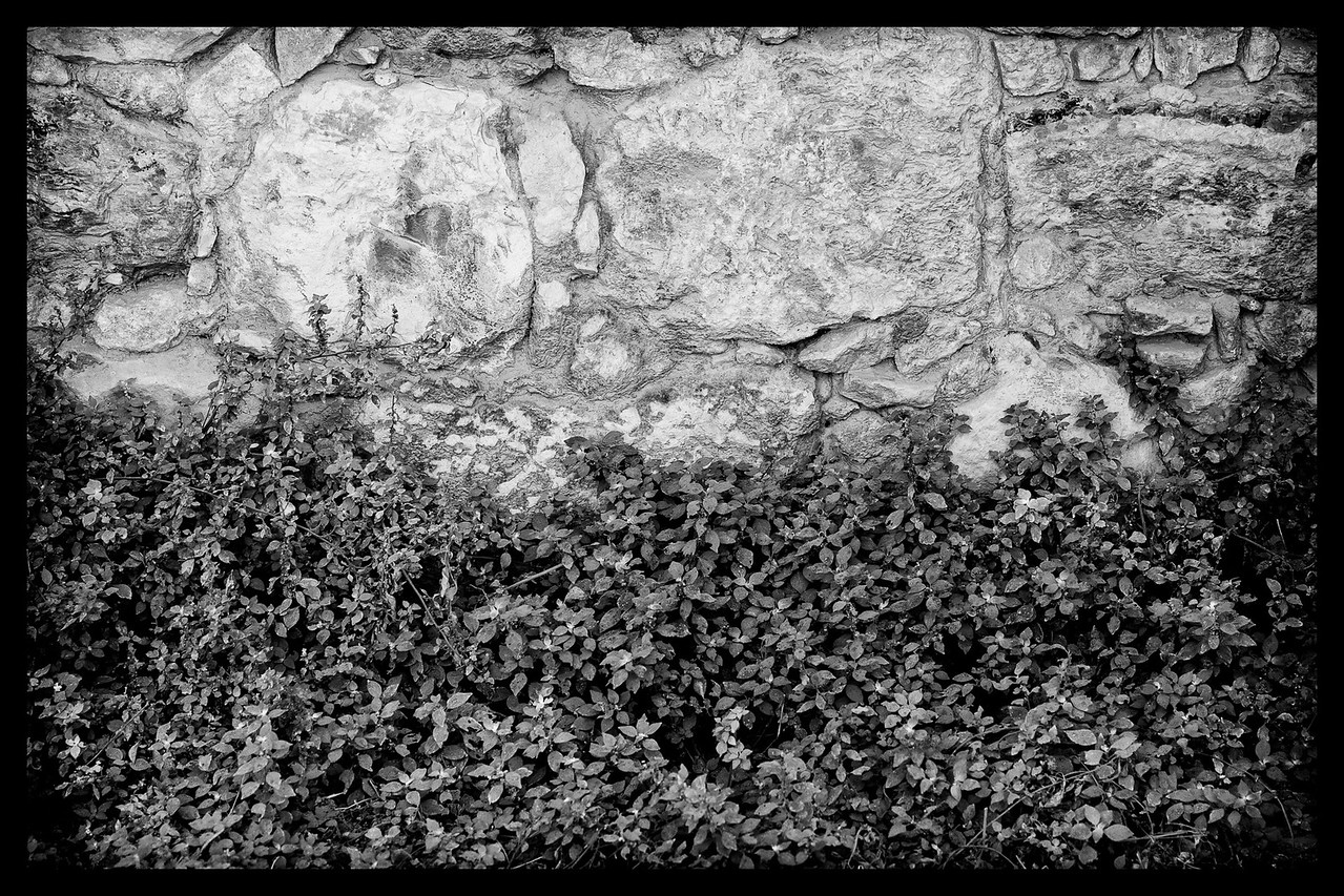 ROCK WALL WITH GREENERY