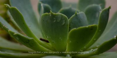 Efecto embellecedor de la lluvia enn flores y hojas Flores y plantas