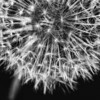 Day 14: :Eye See You: Perfect Little Fireworks