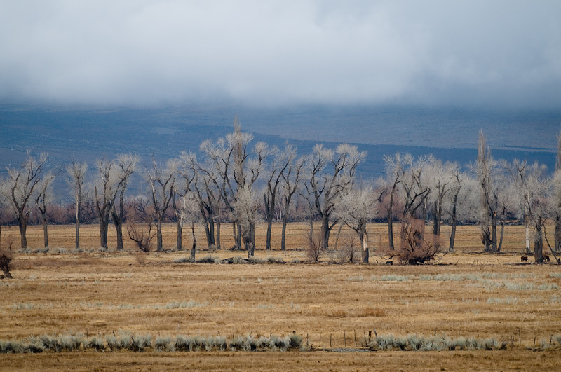 Owens Valley north of Bishop