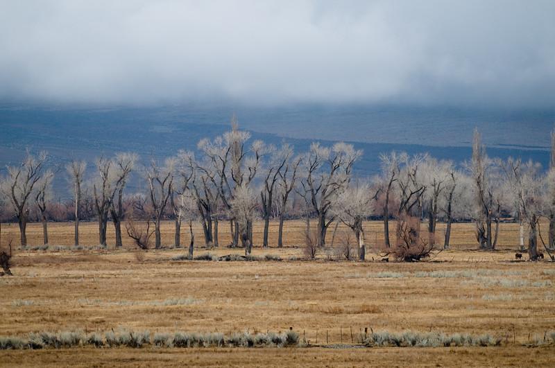 Owens Valley north of Bishop