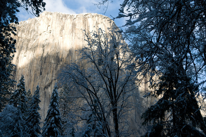 El Cap and trees