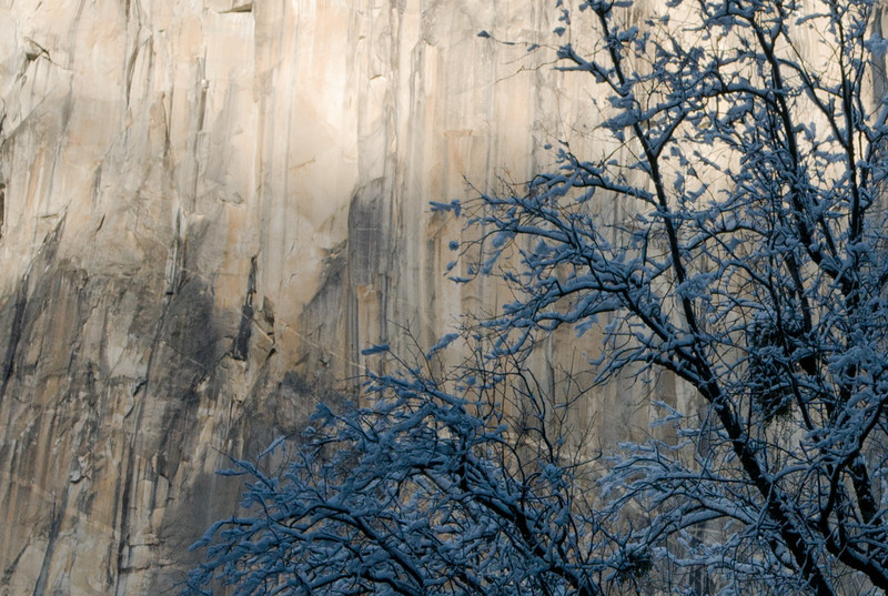 El Cap and trees