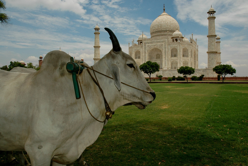 Natural lawn mowers, Taj