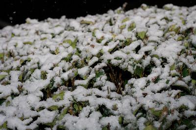 More Snow!