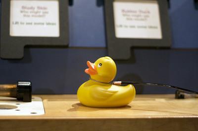 Imprisoned Duck