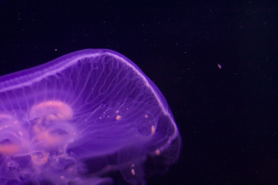 Jellyfish at the SC Aquarium
