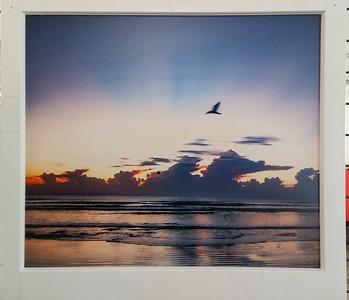 Sunrise w/ bird flying by
