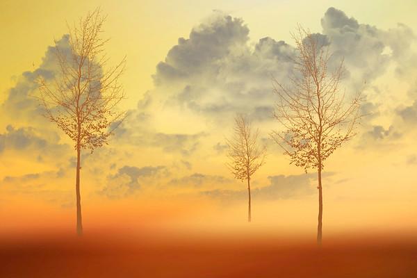 three trees ...