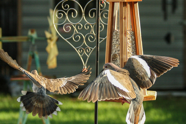 Family day at the bird feeder