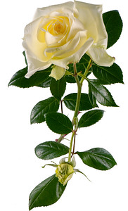 Rose Francine Jordi