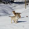Lobo and Lars , Feb 15.