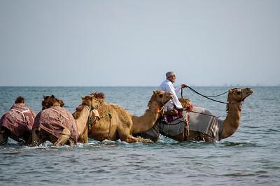 Camel Wash