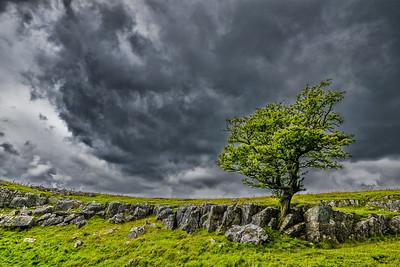 Yorkshire Tree