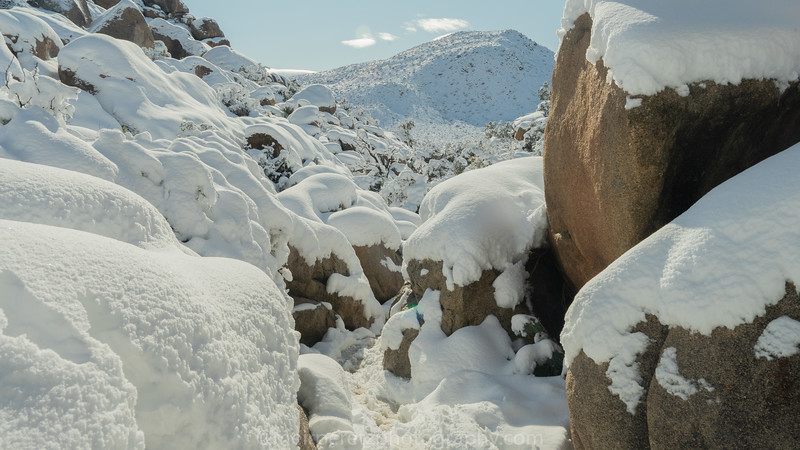 JOSHUA TREE SNOW_-36.jpg
