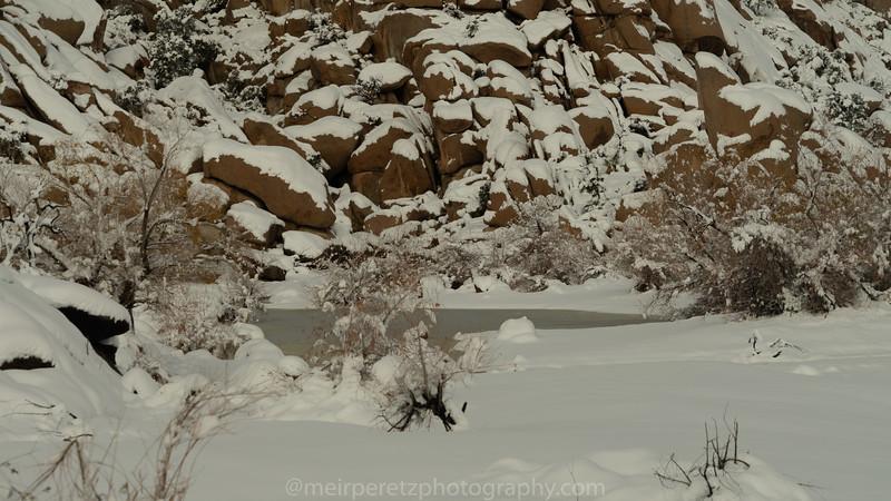 JOSHUA TREE SNOW_-27.jpg
