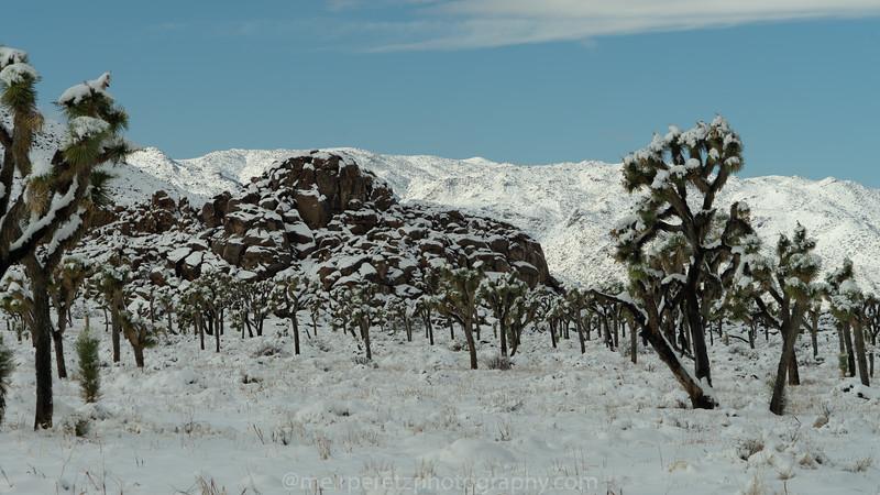 JOSHUA TREE SNOW_-40.jpg
