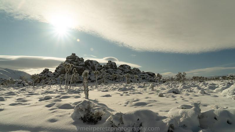 JOSHUA TREE SNOW_-22.jpg