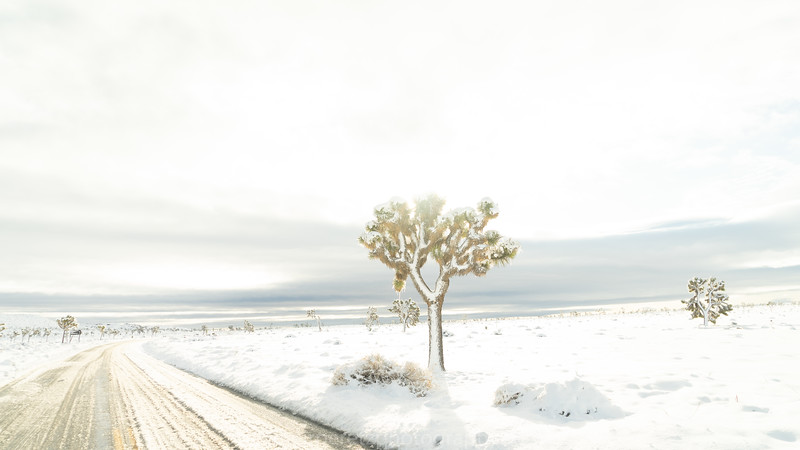 JOSHUA TREE SNOW_-4.jpg