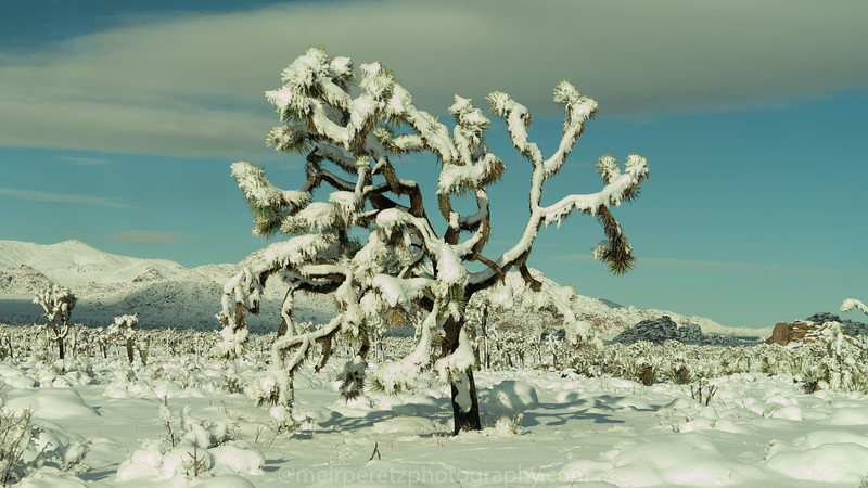 JOSHUA TREE SNOW_-18.jpg