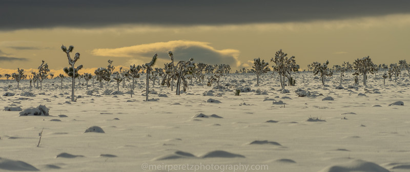 JOSHUA TREE SNOW_-9.jpg