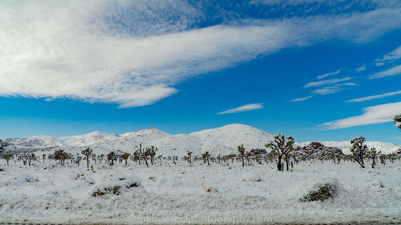 JOSHUA TREE SNOW_-39.jpg
