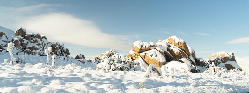 JOSHUA TREE SNOW_-14.jpg
