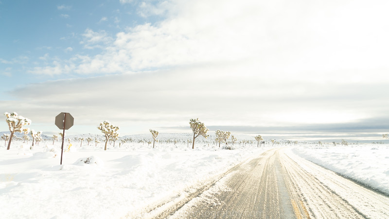 JOSHUA TREE SNOW_-5.jpg