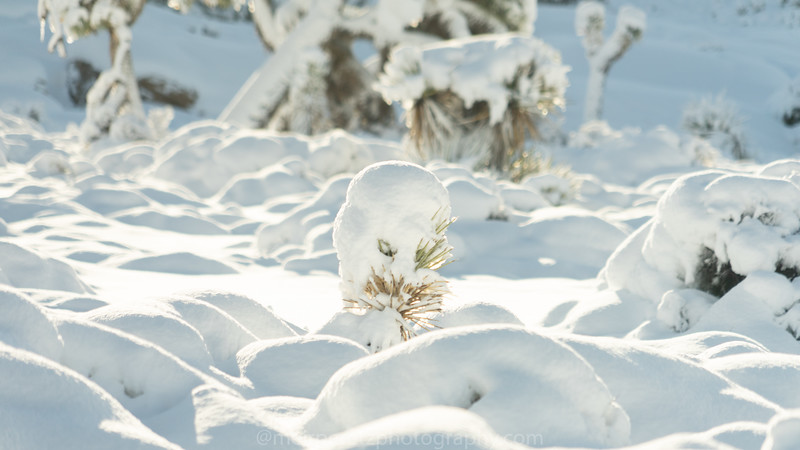 JOSHUA TREE SNOW_-16.jpg