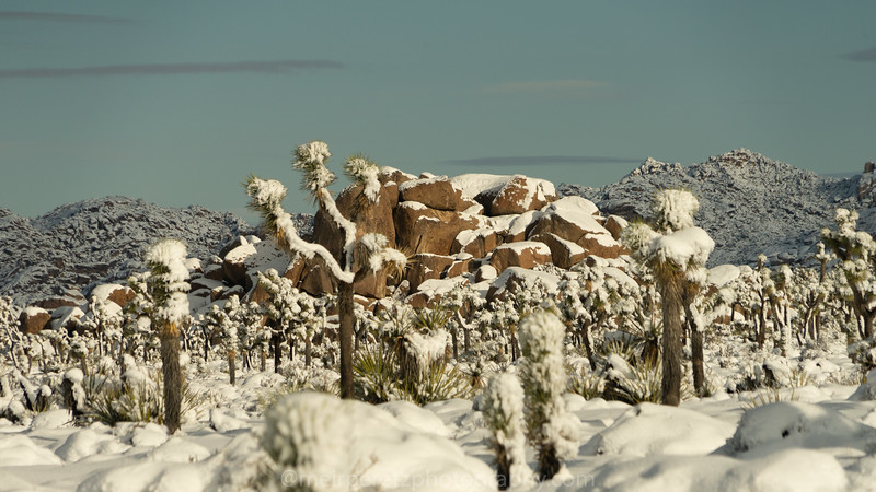 JOSHUA TREE SNOW_-19.jpg