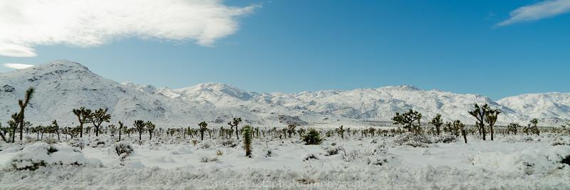 JOSHUA TREE SNOW_-43.jpg