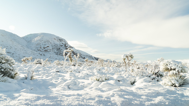 JOSHUA TREE SNOW_-17.jpg