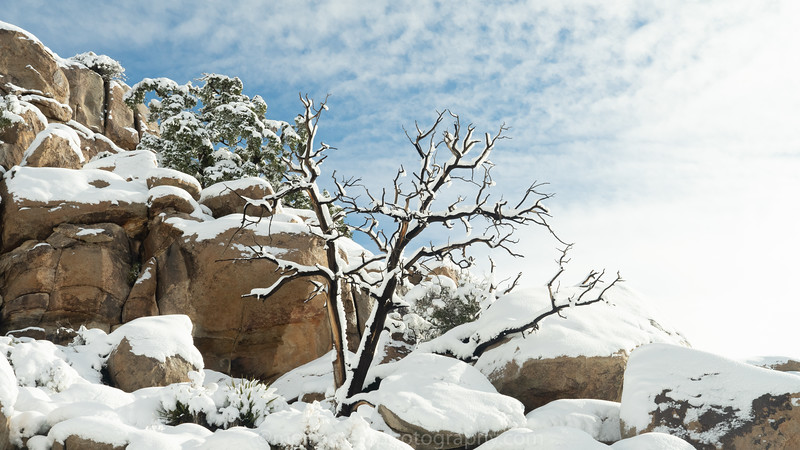 JOSHUA TREE SNOW_-38.jpg