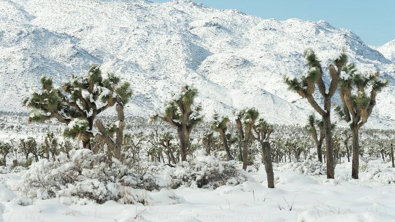 JOSHUA TREE SNOW_-44.jpg