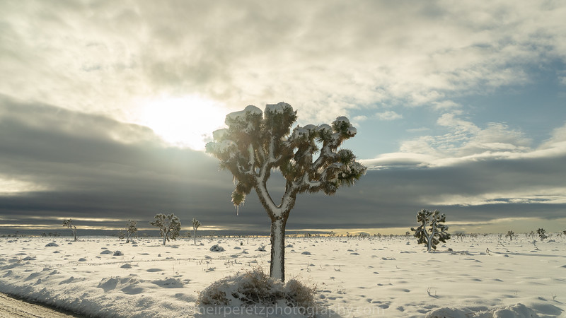JOSHUA TREE SNOW_-6.jpg