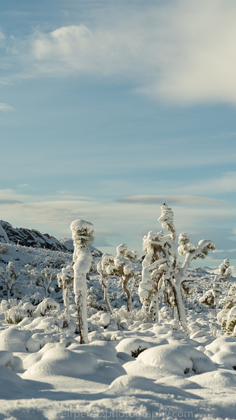 JOSHUA TREE SNOW_-15.jpg