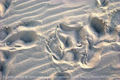 015-footprints-white_sands_ntl_monument_nm-02dec06-12x08-008-350-0062