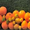 Oranges in Prague~0648-1w.
