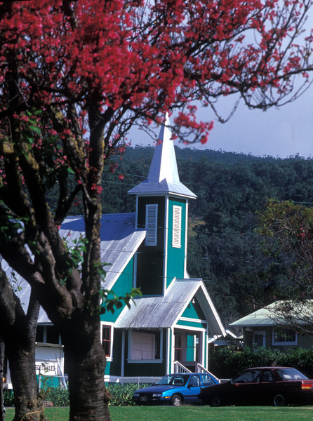cherry blossoms on church row in Waimea