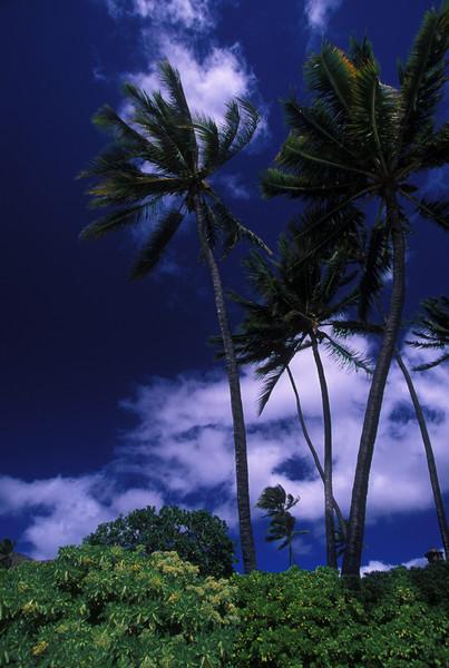Oahu, Hawaii  2/03