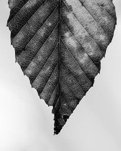 Pattern of Veins