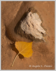 Cottonwood leaf, Dominguez Canyon, near Delta, Colorado